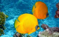 Rybí akvárium