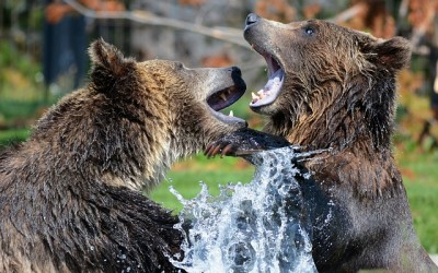 Medvědi – Broken Falls Národní park Katmai