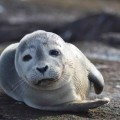 tuleň webkamera, seal webcam