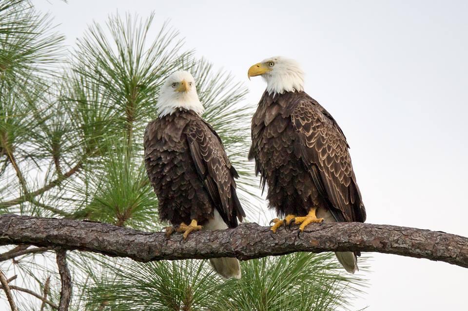 Eagle web cam – Florida | ZooCam