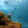 ocean webkamera