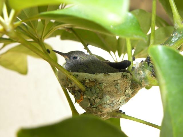 kobřík webkamera hummingbird webcam