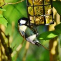 bird feeder webcam, birds feder webcam