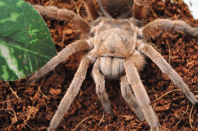 Terarium s pavoukem – Sklípkan webkamera