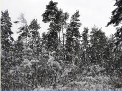 1 ORLÍCI pohled na strom s hnízdem
