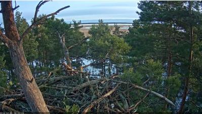 Hnízdo Orla mořského v oblasti Saunjaského zálivu