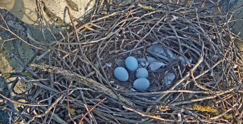 Druhé až Čtvrté vajíčko