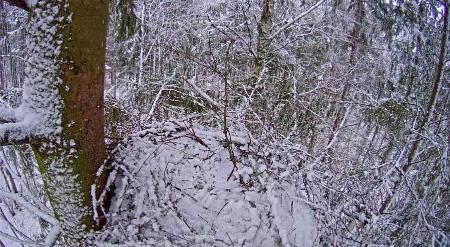 Hnízdo káněte lesního – historie