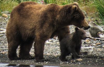 [: En] Sichel mit einem Baby [: En] Sichel mit einem Baby.