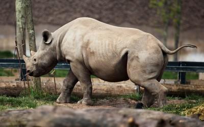 Výběh nosorožce a mláděte