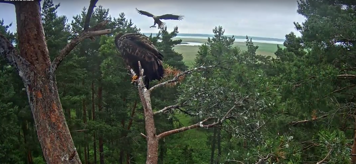 Nese se snídaně orlům