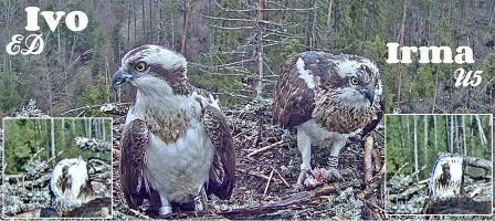 Jména páru orlovců hnízdo 2