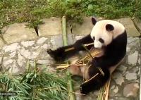 Pandí hody