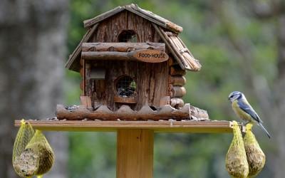 Krmítko pro ptáky – webkamera