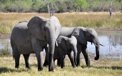 Sloní napajedlo – webkamera