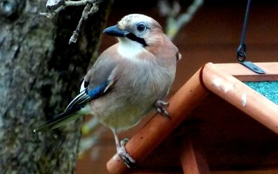 Ptačí krmítko pítko webkamera