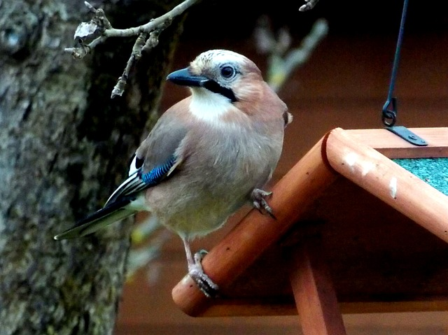 Bird Feeder - webcam Poland