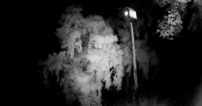Hnízdění sovy pálené 2016
