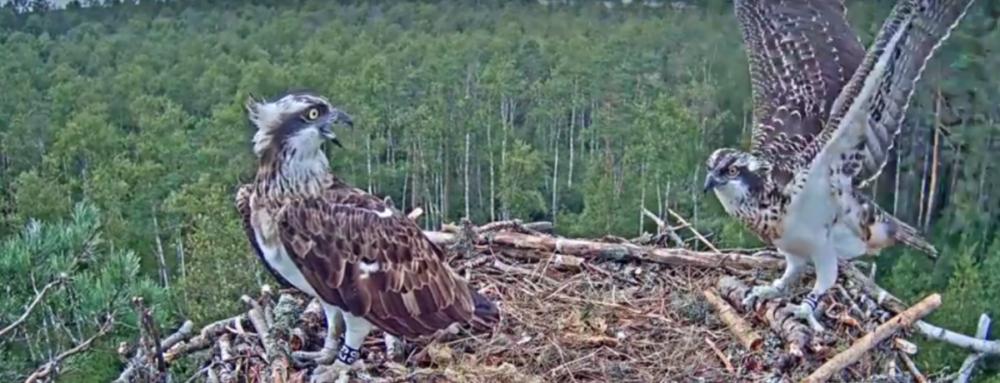 Video záznam Neeme a jeho první let