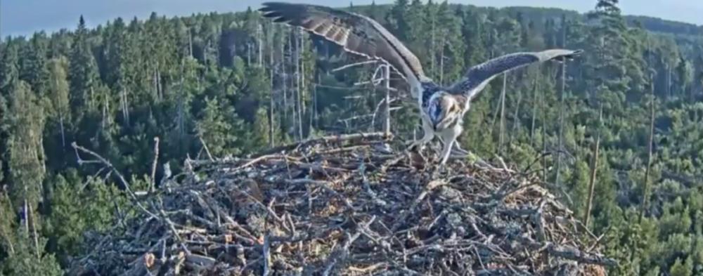 Video záznam Ivar a jeho boj s rybou