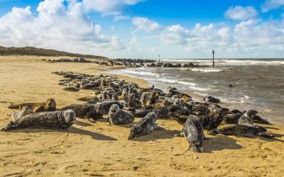 Tulení pláž – webkamera