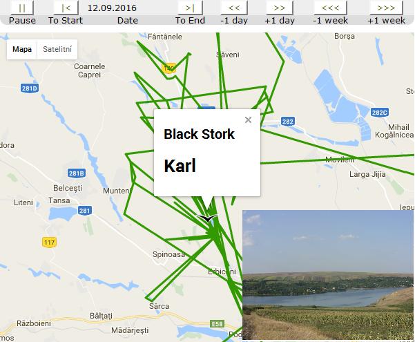 Karl migrace den 25-36