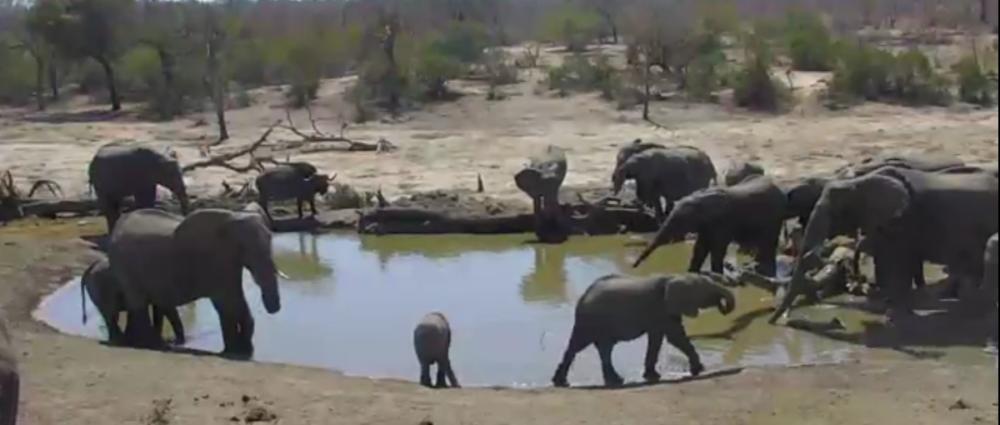 Sloní napajedlo v Africe