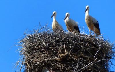 Čapí hnízdo ve Španělsku