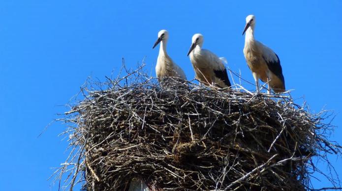 Spade nest in Spain