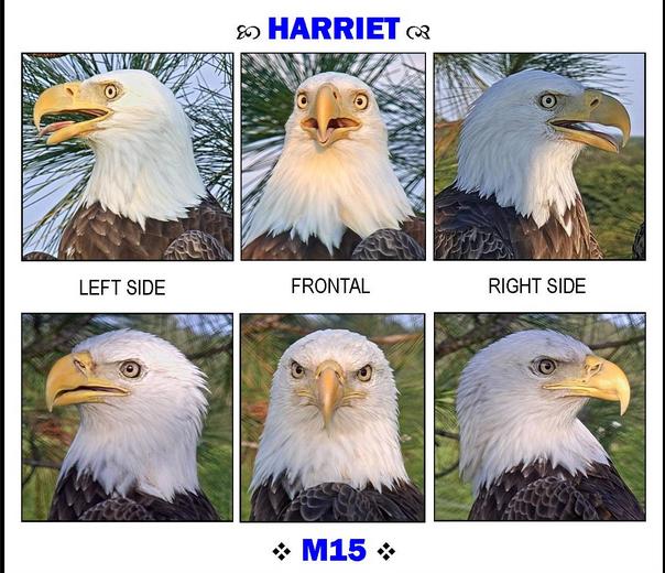 Hariiet a M15 poznávací znaky