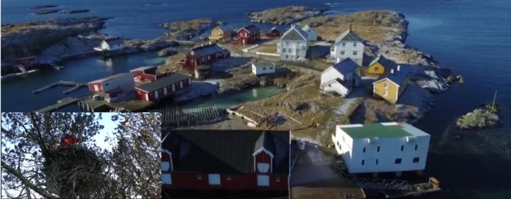 Orel mořský Norsko – hnízdící oblast