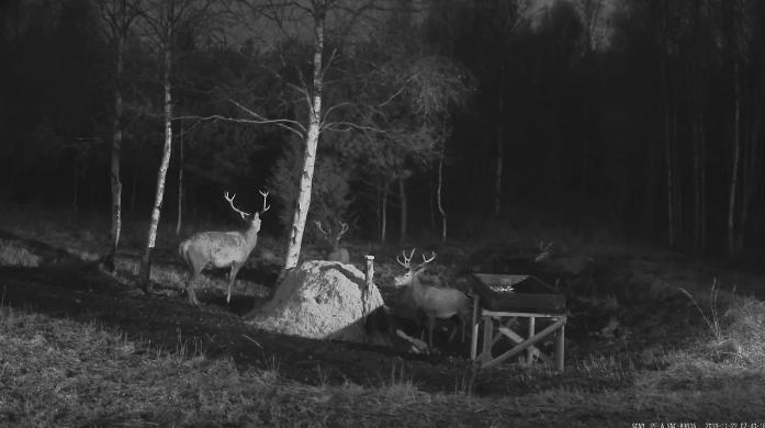 Krmelec v Estonsku videozáznam