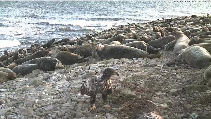 Tulení pláž Vilsandi videozáznam