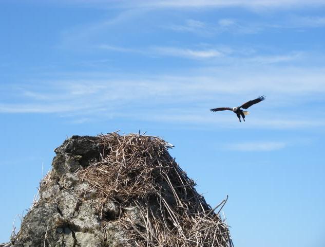 Kalifornie orlí hnízdo na skále historie