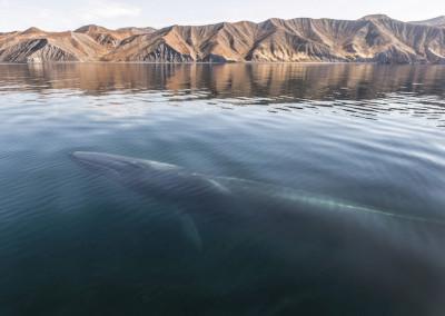 velryby-1