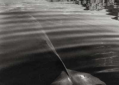 velryby-11