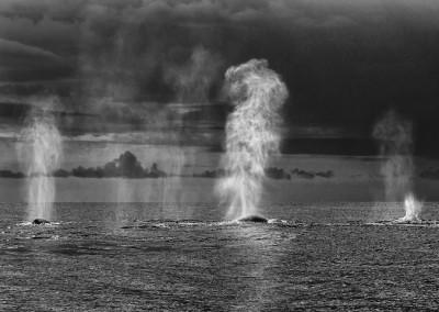 velryby-2