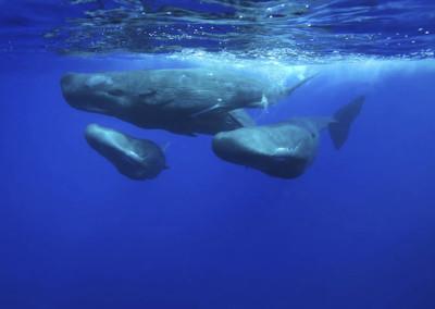 velryby-3