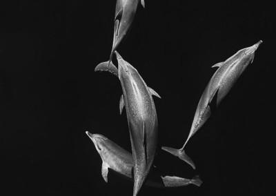 velryby-6