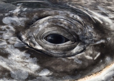 velryby-7