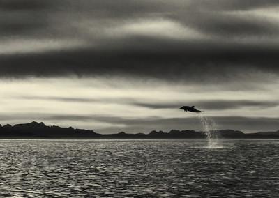 velryby-8