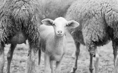 Webkamera z ovčína