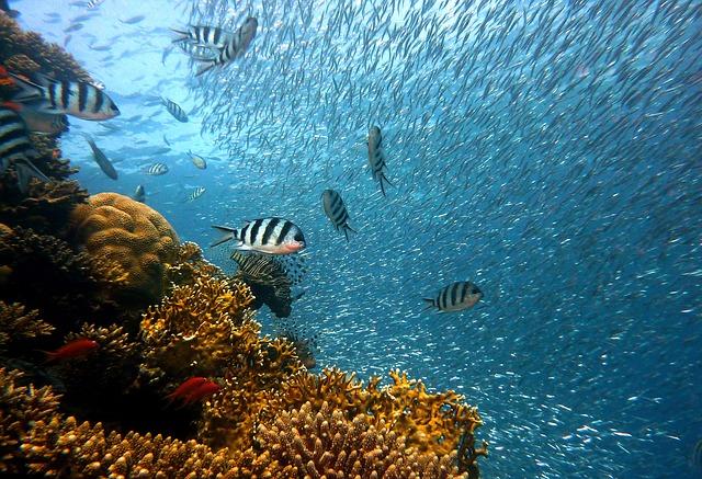 Podmořská kamera korálového útesu