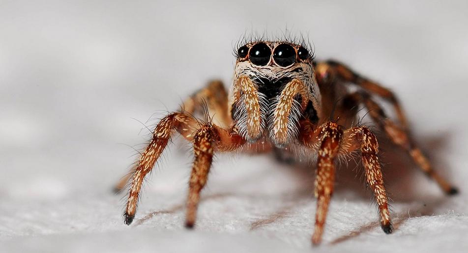 Dokumentární film o pavoucích