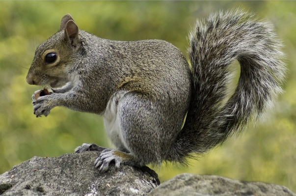 Veverky v Coloradu