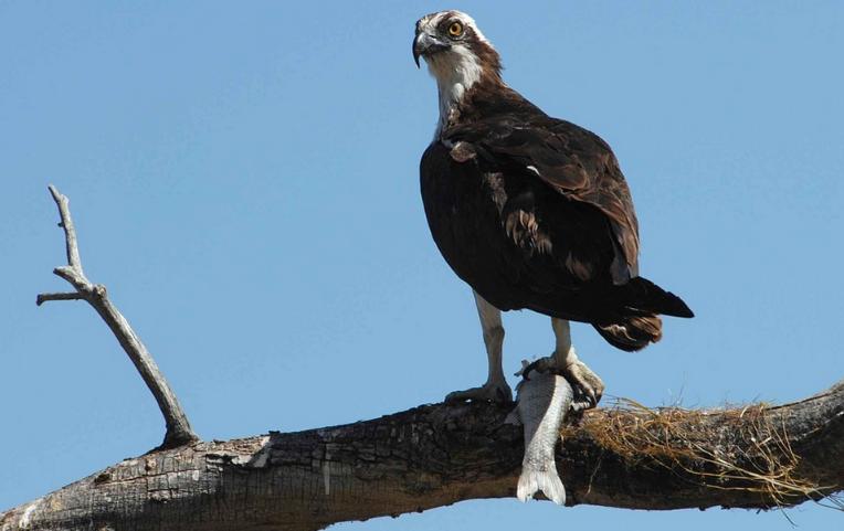 Orlovci z Colorada již migrují