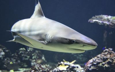Žraloci dokumentární film