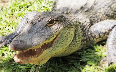 Dokumentární film o krokodýlech