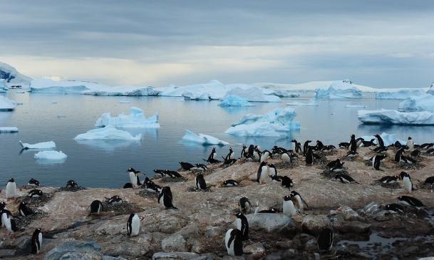 Život na Antarktidě dokumentární film