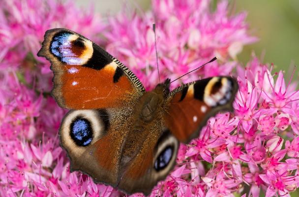 Dokumentární film o motýlech